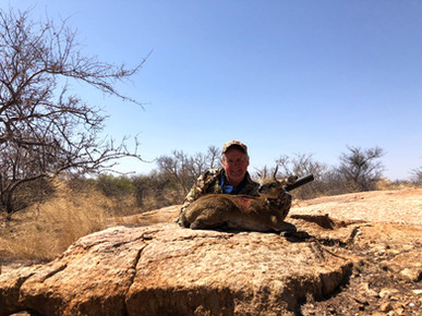Klipspringer Tiny Ten Limpopo South Africa