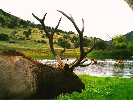 San Carlos Apache Tribe Elk Hunts!