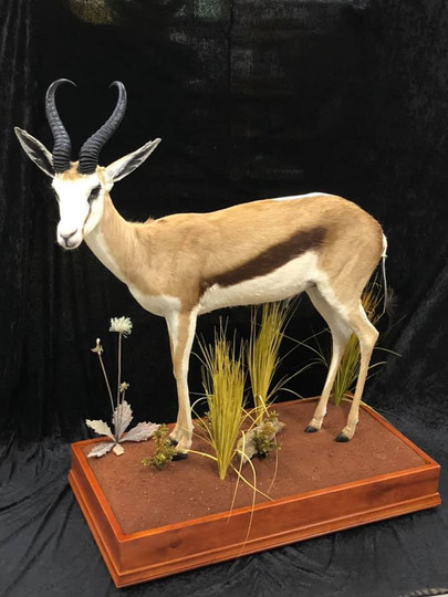 African Full Mount By Taxidermist Markus Michalowitz