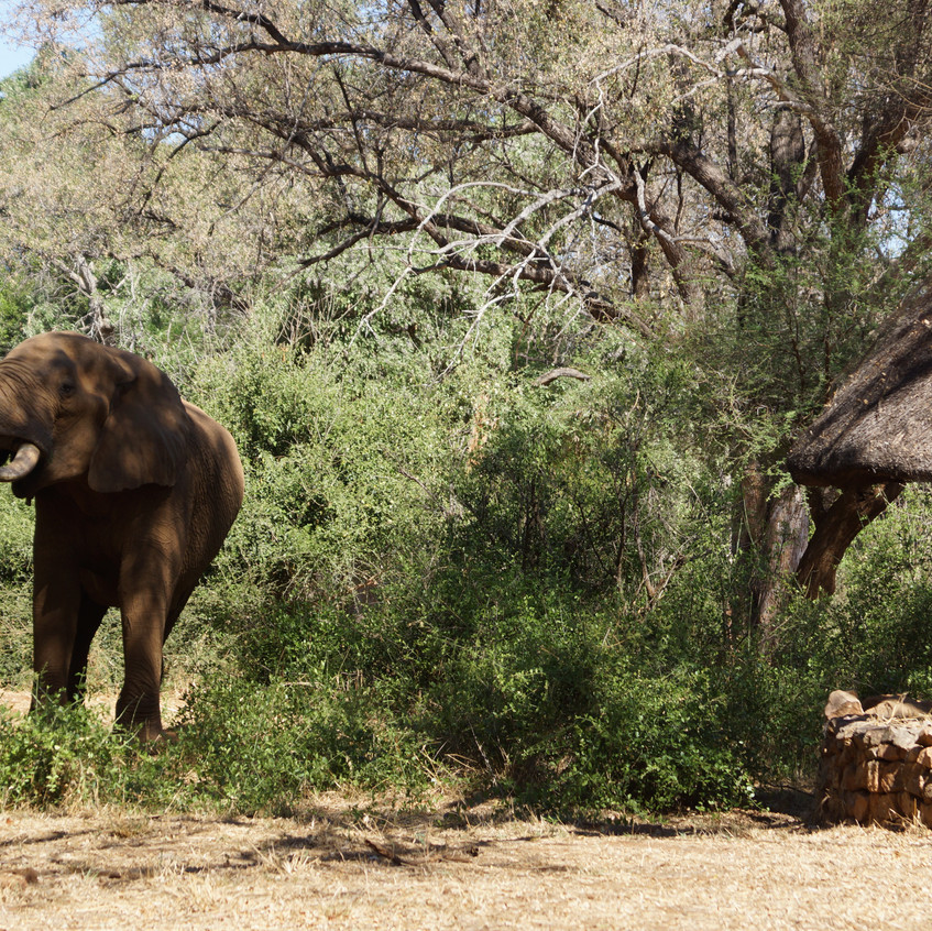Up close with Kruger Elephants