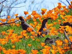 Wildflowers On San Carlos Arizona