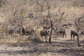 Post Safari Visit To Kruger National Par