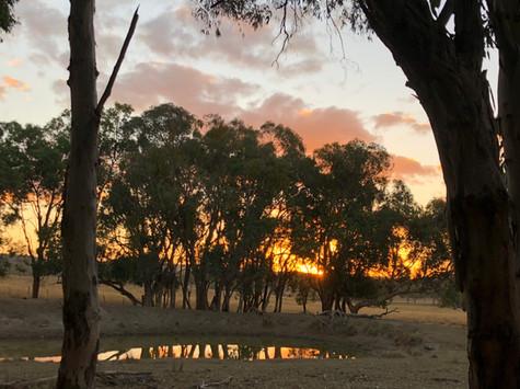 Beautful Sun Set in Deer Camp