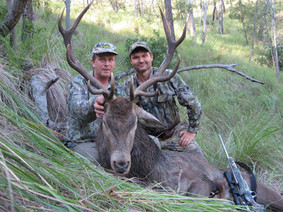 Red Deer Guide Markus Michalowitz Downunder Taxidermy Studio & Guide Services