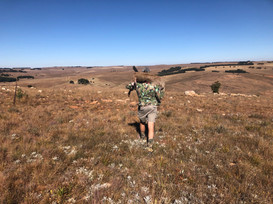 Hunting Mountain ReedBuck South Africa.j