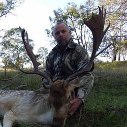 Fallow Deer Hunting NSW