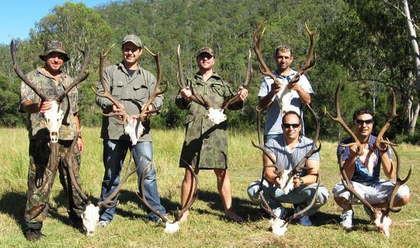 Red Deer Hunting South East Queensland