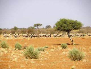 Plains Game Hunting Safaris