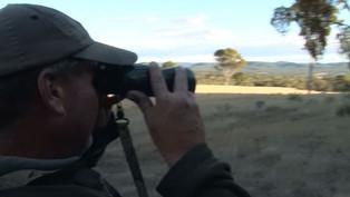 Fallow Deer Hunting Australia New Website
