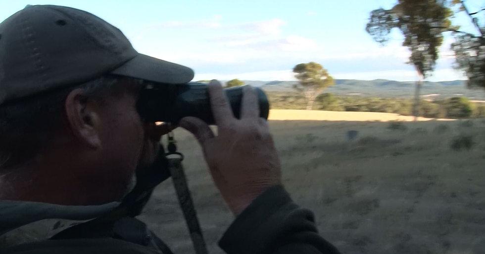 Fallow Deer Rut Hunt NSW