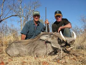 Warthog Hunting In Africa