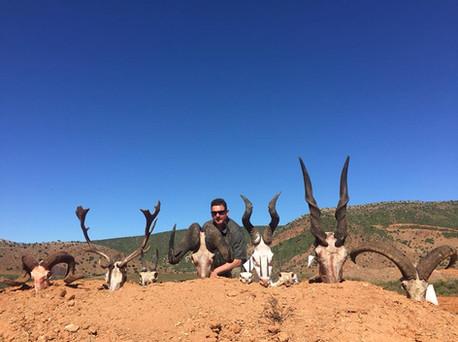 Small & Large Plains Game Hunting Safari