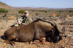 Black Wildebeest Eastern Cape Royal Karoo Safaris