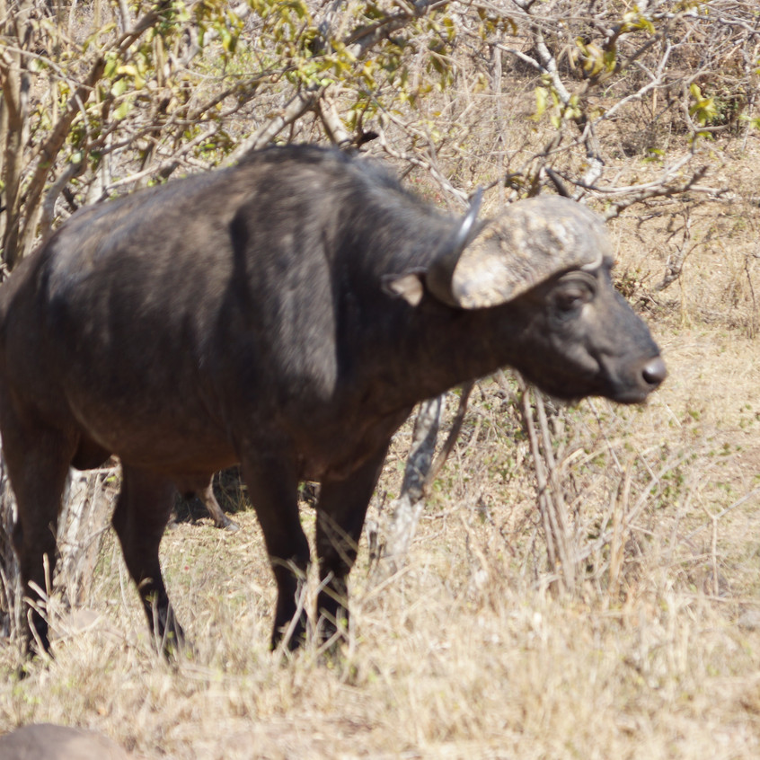 Kruger National Park Tour With Ranchero Safaris Limpopo