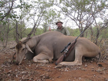 Eland Bull Limpopo South Africa