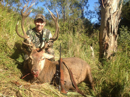 South East Queensland Red Stag