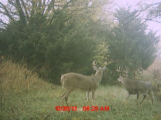 Affordable Whitetail Deer Hunting In Kansas