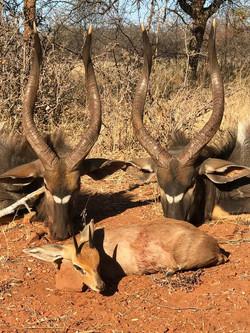 Nyala and Steenbuck Plains Game Hunt