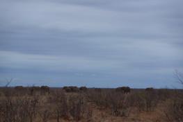 Trip To Kruger National Park