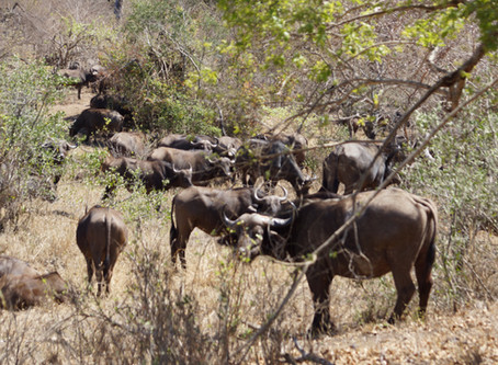 LIVE FULLY...DISCOVER REMOTE AREA ATTRACTIONS & TRAVEL THE ROADS TO ADVENTURE IN SOUTH AFRICA