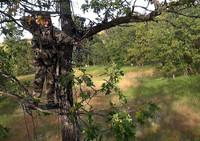 Archery Season Kansas