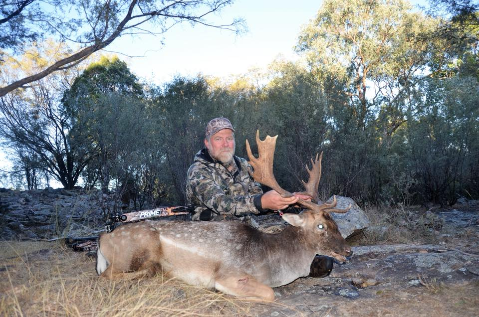 Fallow Deer Rut 2018 Rick