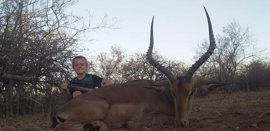 Beautiful Impala bull