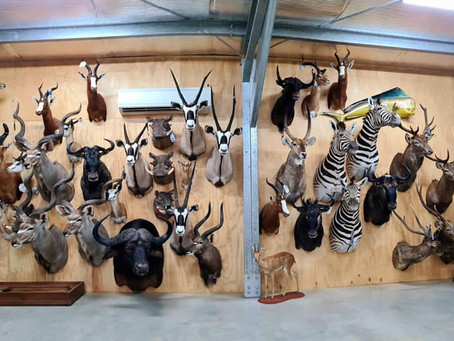 South Africa Game Mounts Completed
