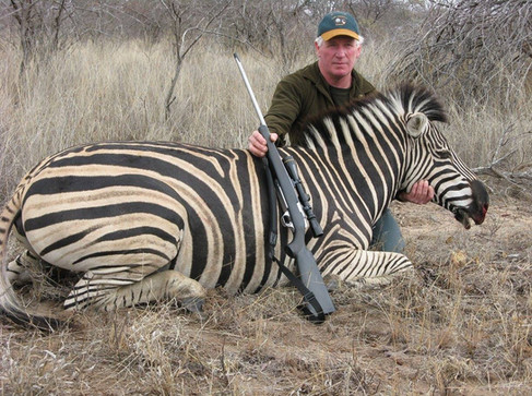 Zebra Large Plains Game Hunting