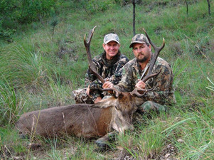 Red Stag Hunting With Downunder Taxidermy Studio & Hunting Guides