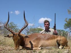 Impala Plains Game Species Limpopo