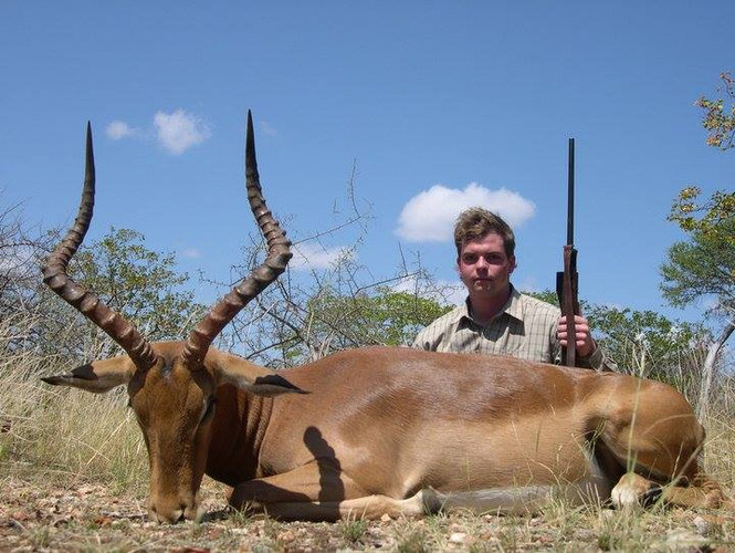 Impala Antelope Limpopo Hunting Plains Game Safaris Ranchero Outfitters
