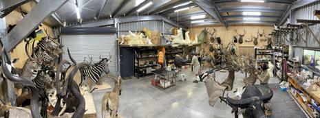Downunder Taxidermy Studio Queensland Australia