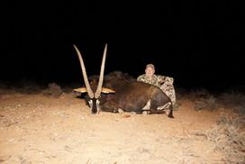 Black Sable Antelope Eastern Cape South Africa Royal Karoo Safaris