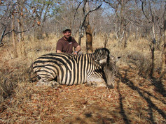 Zebra Hunting With Downunder Taxidermy Studio & Guiding Services