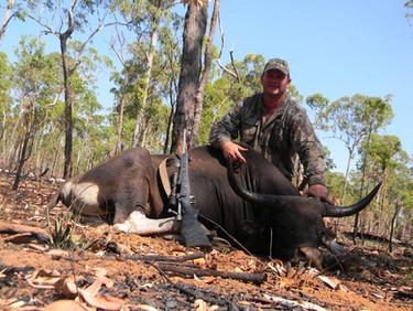 Banteng Hunting Safaris Australia