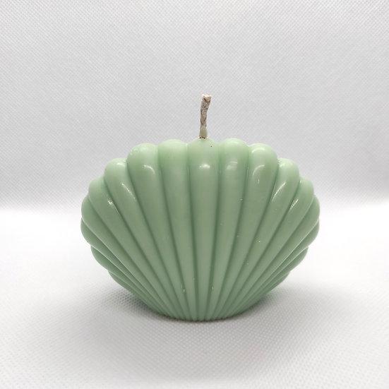 Cucumber Water 'Spanish Shell'