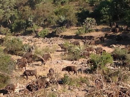 Kruger National Park: Game Reserves, natural classroom
