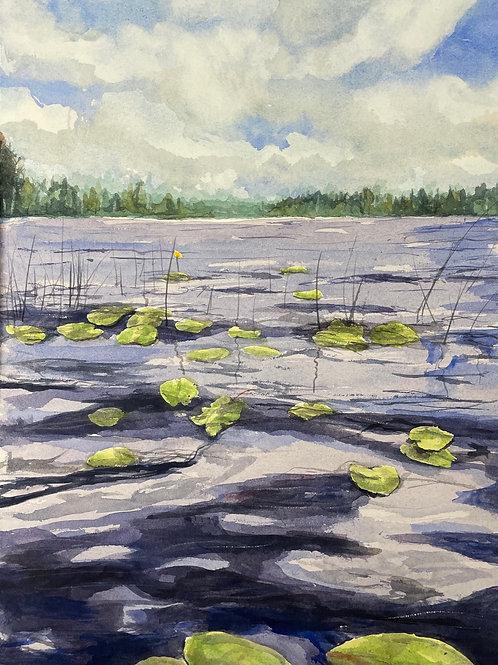 Näckrosor i sjön