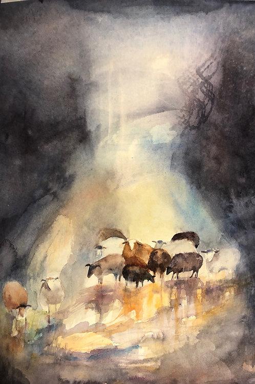 Sheep's weather