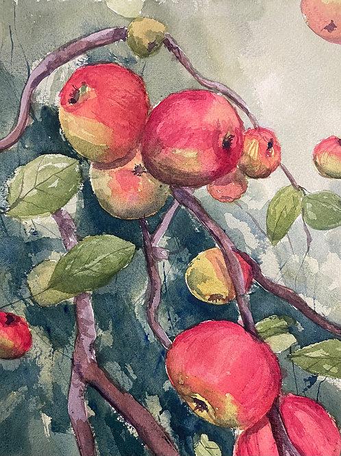 Äpplen från Anna