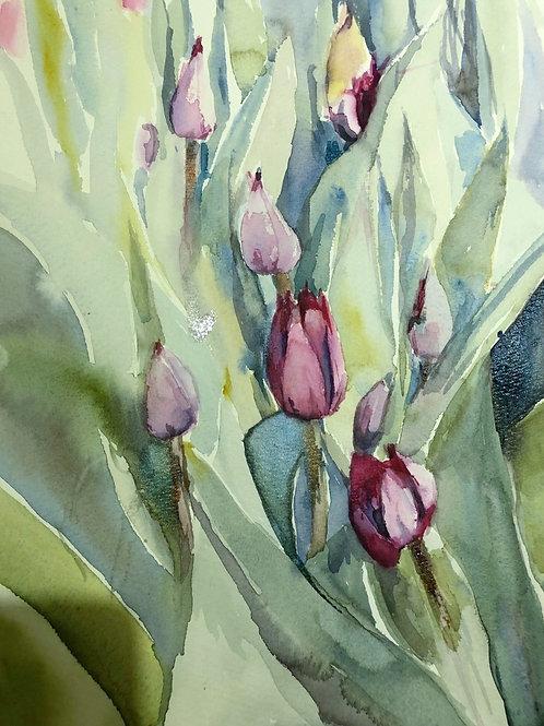 Vårens tulpaner