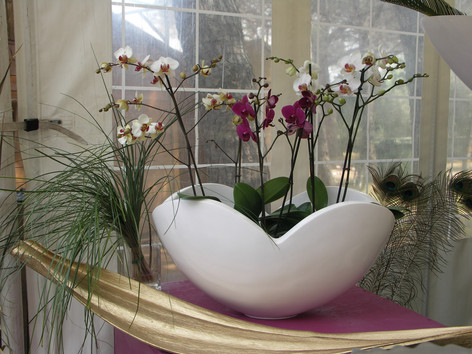 Coupe mistral & orchidées