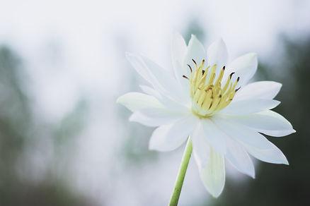 white-and-yellow-flower-in-tilt-shift-le