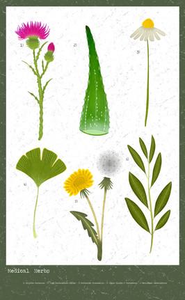 herbs 3