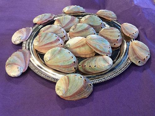Miniature Abalone Shells
