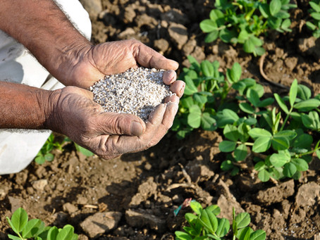 Why farmers Opt chemical fertilizers as their  first choice but not Bio-fertilizer