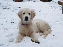 Tyrocoll snow day