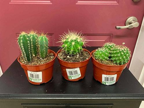 "Cacti 4"""