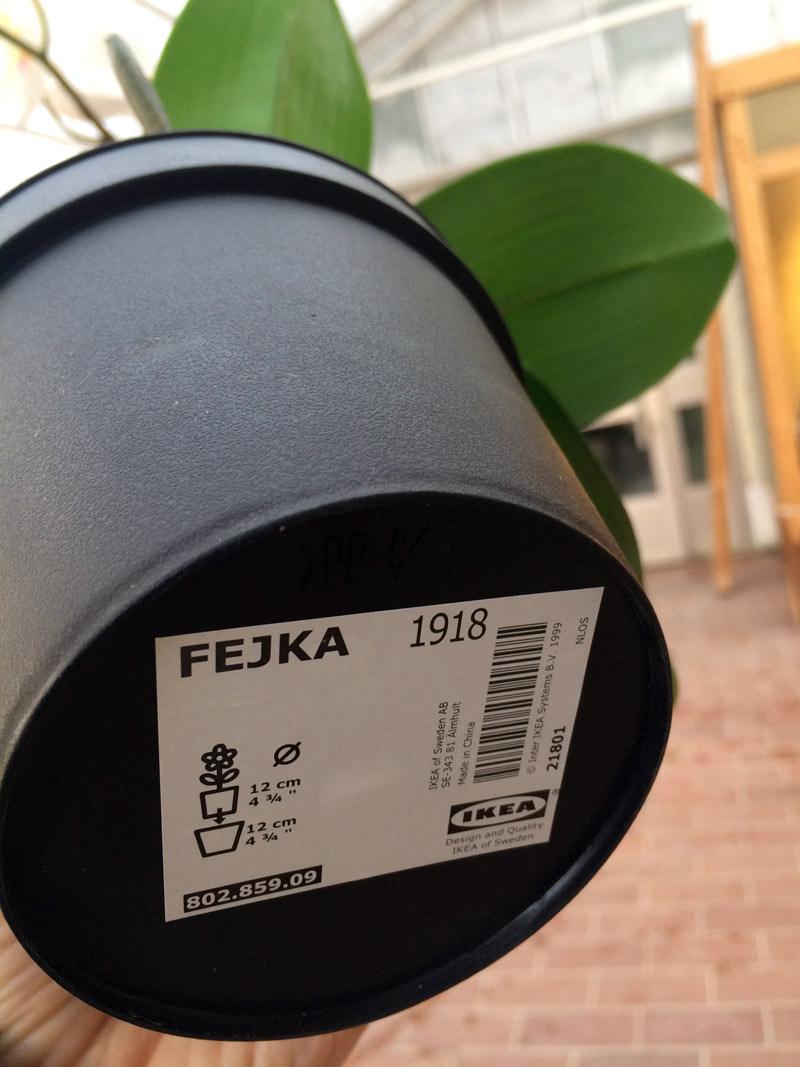 Name_Fejka_LR.jpg